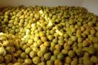本人有大量融水糯米柚资源柚子批发,咨询18576210331