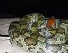 融水山洞发现巨蛇,冬天真是难得一见