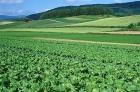 求一块田种蔬菜
