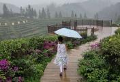 微雨游茶园,云雾绕山边。楼梯一步步,