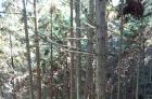 20年杉木山场出售
