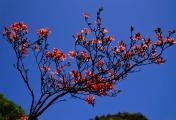 盛开的杜鹃花!