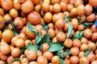 30砂糖橘1.5元1斤,要5斤以上(含5斤)县城内包送