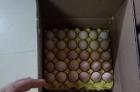 鸡蛋零售十五一板