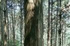大木头转让