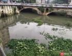 大雨过后融水风云桥下的大只塘角鱼出洞了,你敢吃咩