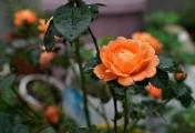 走进春天花卉,感知自然之美