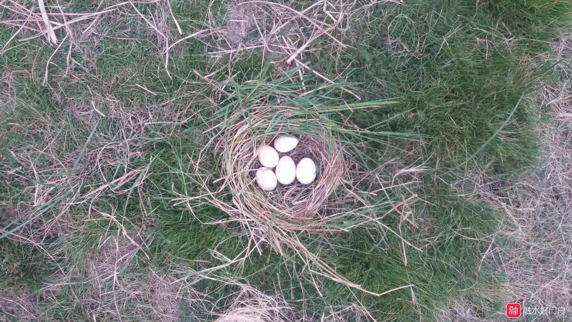 田野上的鸡蛋.jpg