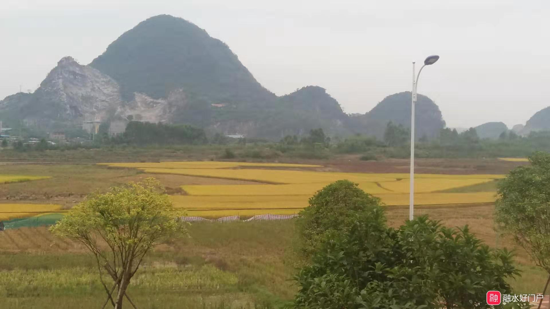金色的田野.jpg